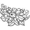 Chrysanthemum Cutie