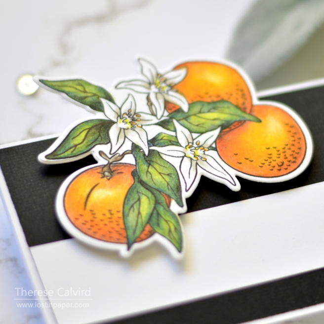 Lostinpaper - Shading with Prismacolors - Fun Stampers Journey - Orange Blossoms (card video) 1